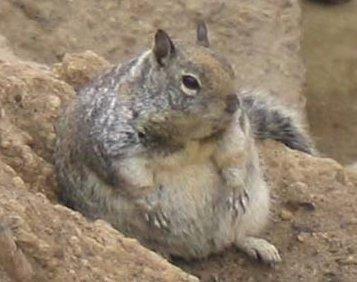 Machen Nüsse dick?