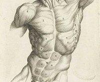 Schmerzen in der Muskulatur?